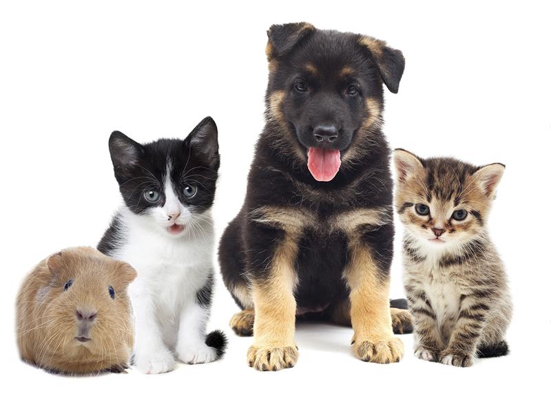 Serviços profissionais veterinários