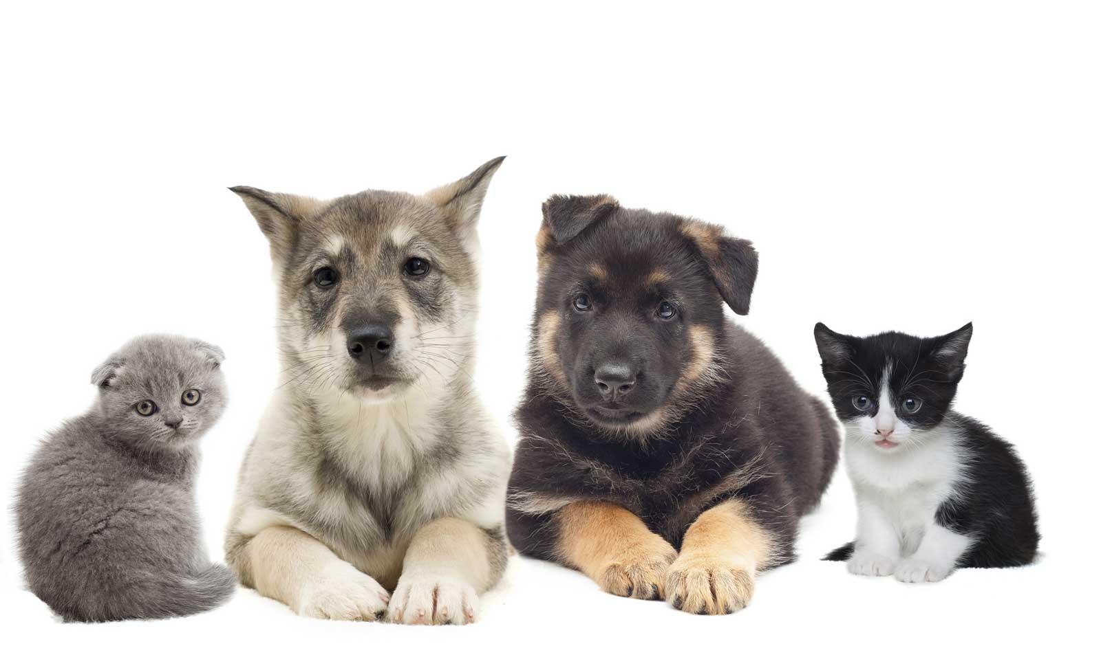 Serviços veterinários Os Patudos